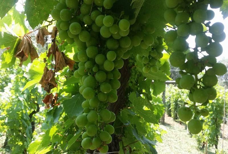 Wine Tasting Sorrento Coast