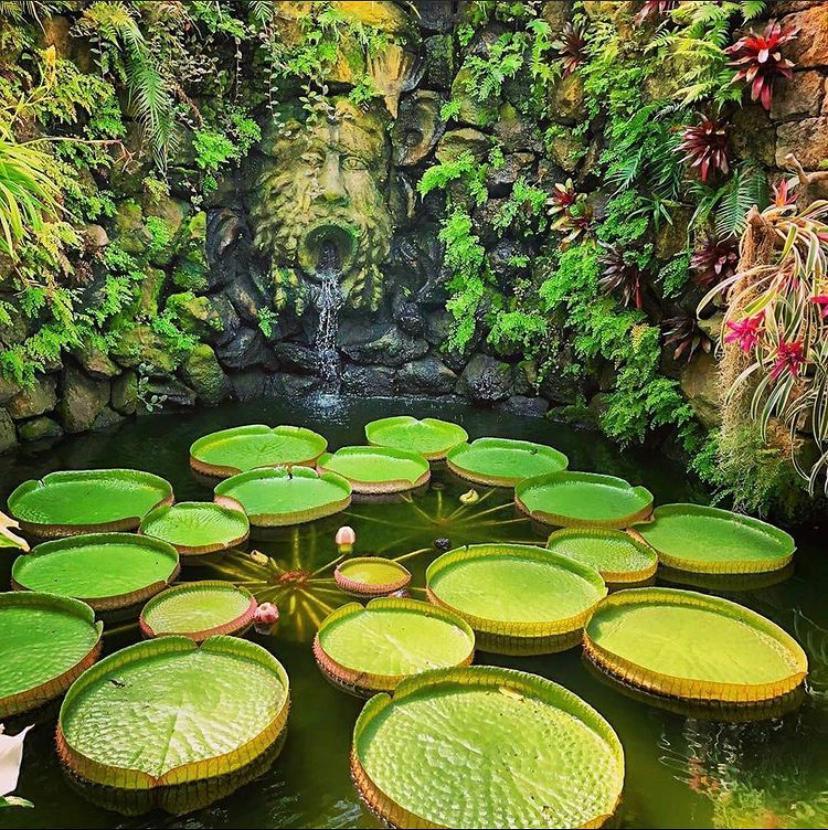 Giardini La Mortella di Ischia